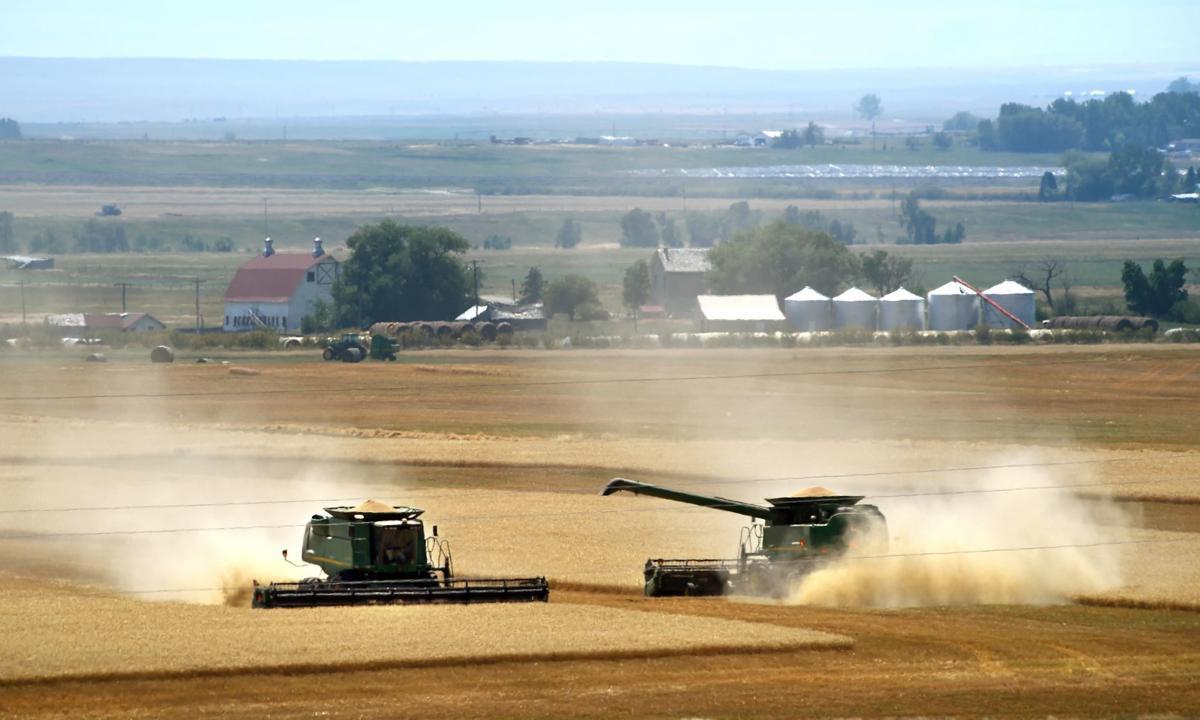 Winter wheat combines