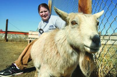 Goat at bar stolen from Fairmont Hot Springs petting zoo