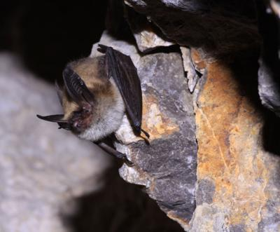 8 treated after bat exposures