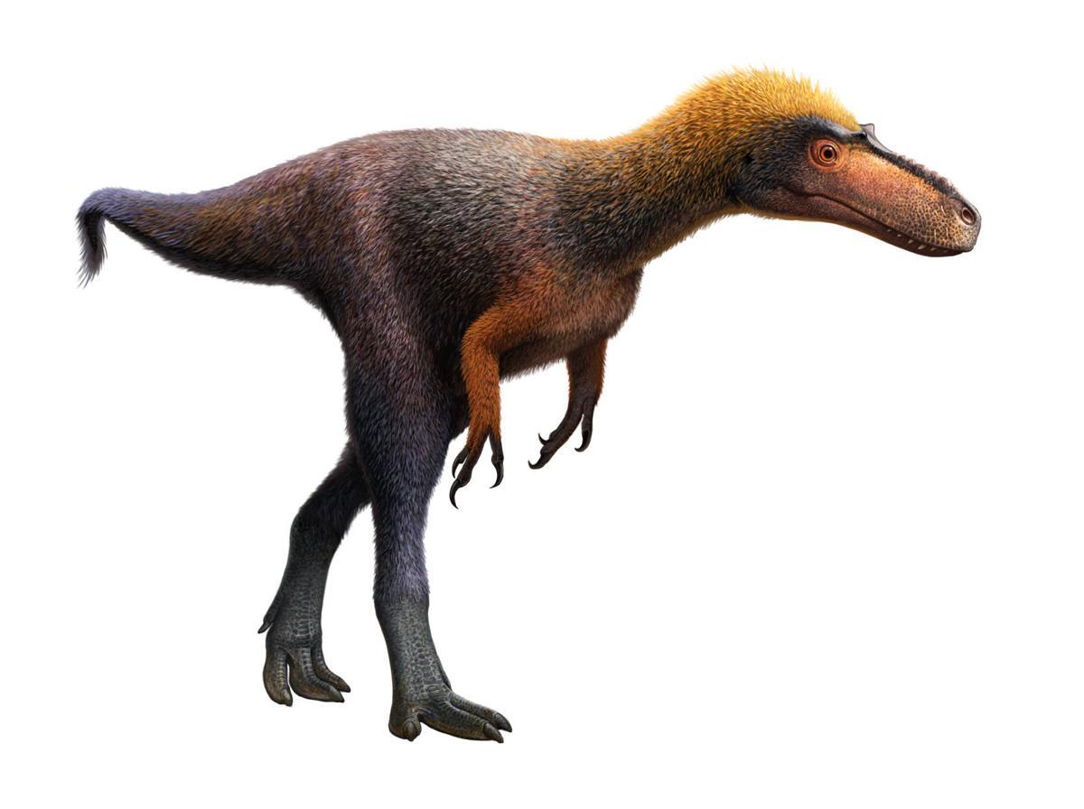 Tiny T Rex