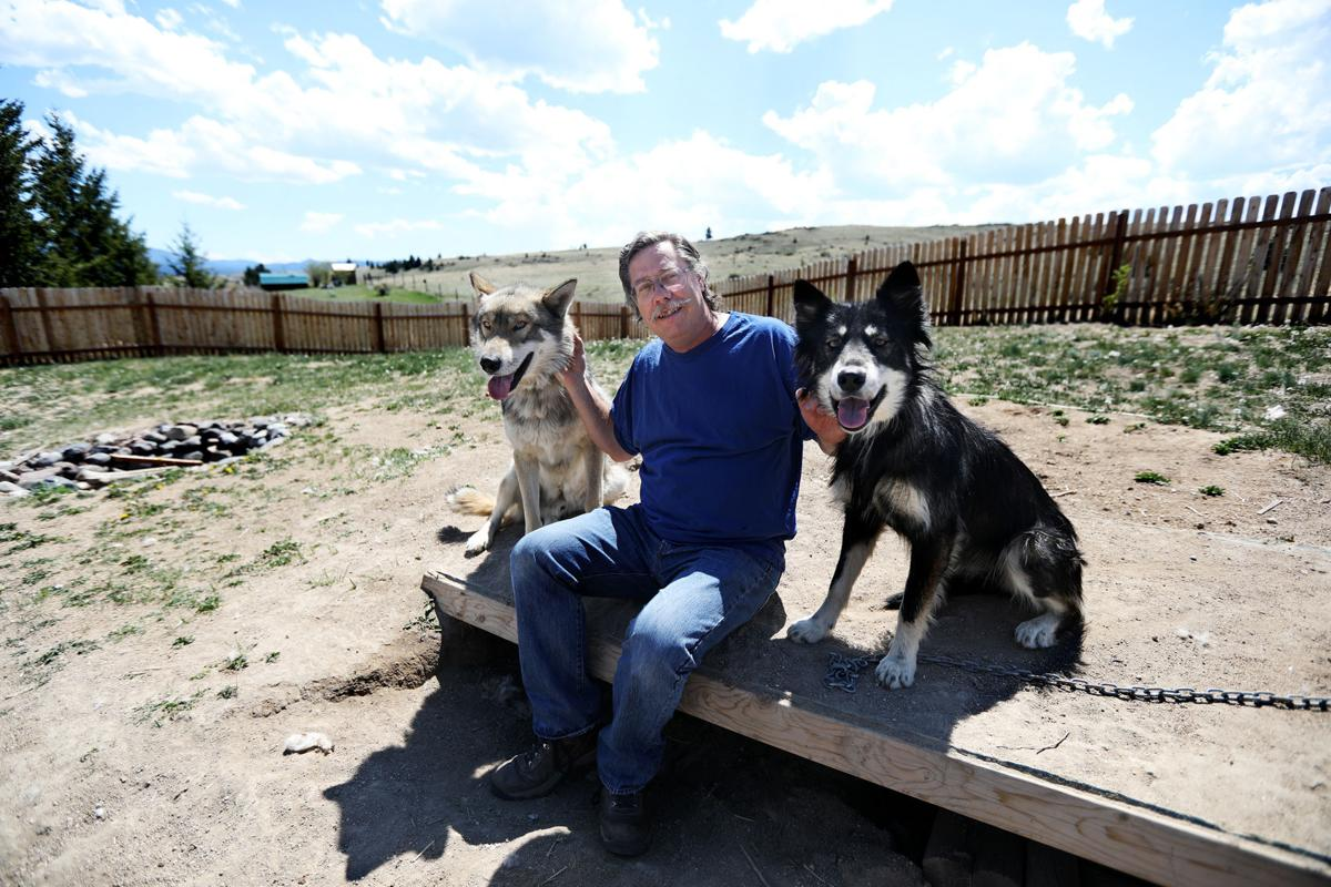 Butte man with his wolfdogs