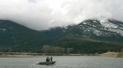Kootenai River Sturgeon