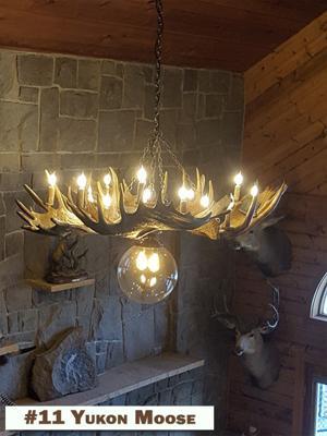 11 Yukon Moose.jpg