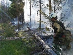 Forest Service seeking people to fill temporary, full-time jobs this summer