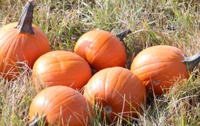 Pumpkin stock art