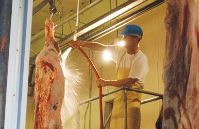 Kill Floor Worker Dan Fortune Rinses Down Beef That Was Treated With A  Bleach And Water Solution Thursday Afternoon At The Ranchland Packing Co.  In Butte.