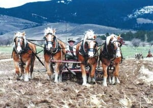 Plowing Tradition Local Mtstandard Com
