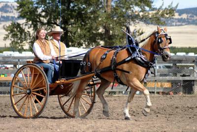 Winning Haflinger at Draft Horse Expo | Local | mtstandard.com