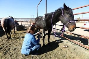 Watch now: Butte Vigilante Rodeo Grounds get spooky