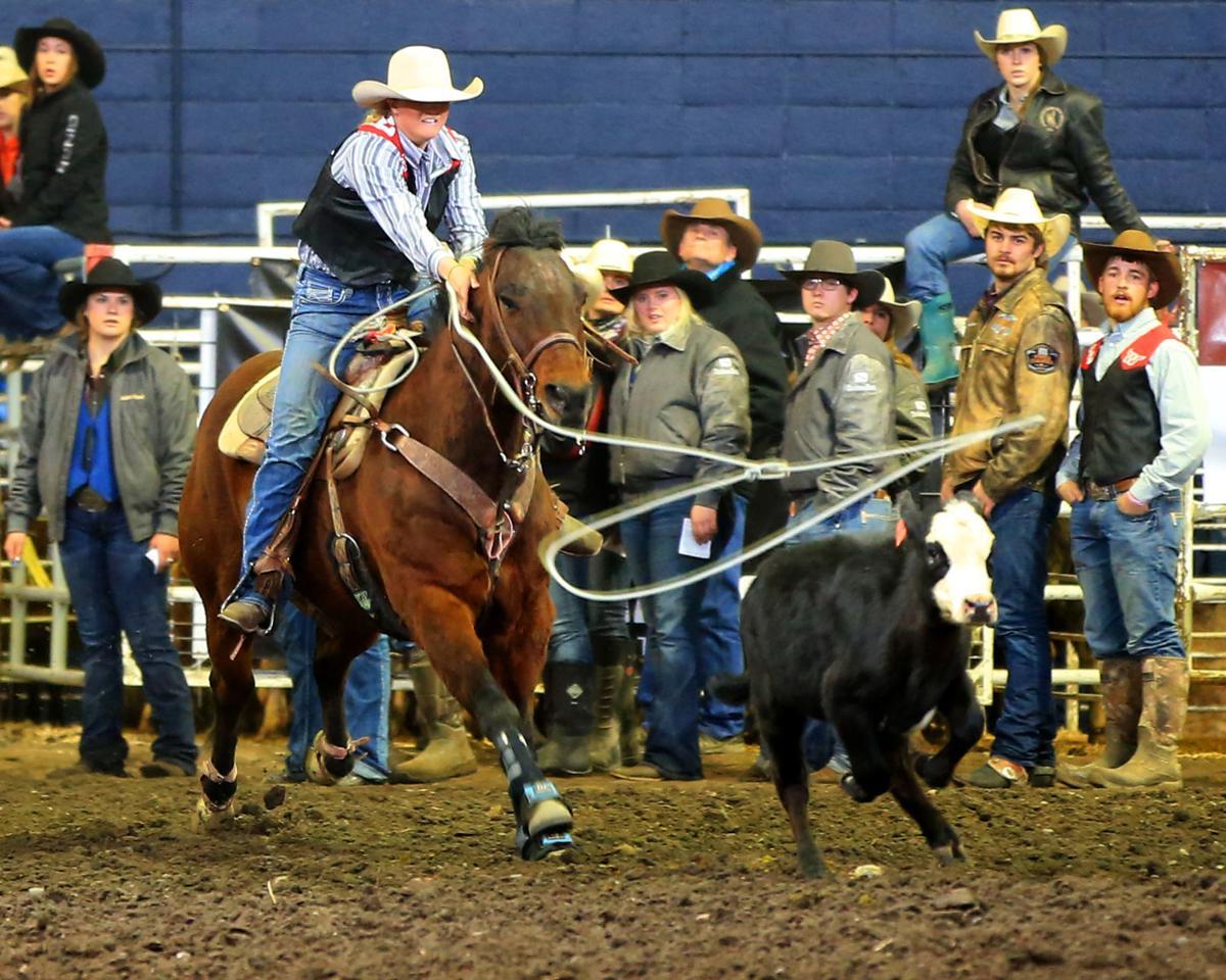 Tess Turk Montana Western rodeo