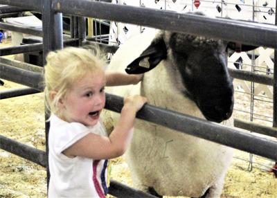 Fast friends at the Tri-County Fair in Deer Lodge