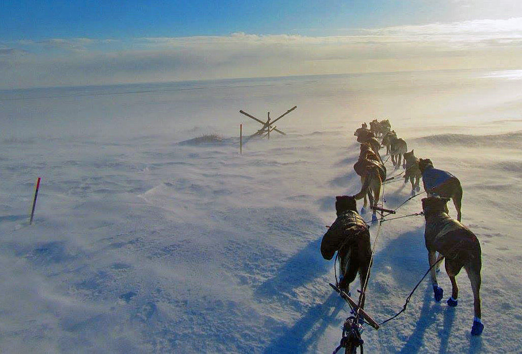 Jessie Royer Iditarod 2017