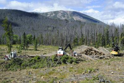 The Chessman Reservoir timber project is one of the many Forest service projects to come under litigation in recent years.