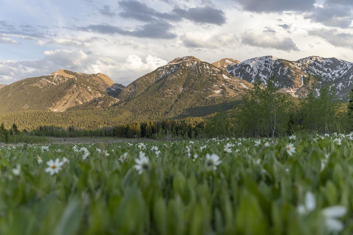 The Centennial Mountains