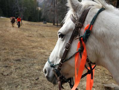 Hunting harvest picks up, wild game processors swamped