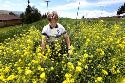 Tech gets funding to investigate invasive species that thrive in Montana and Kashmir