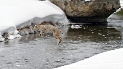 Grizzly Creek Films