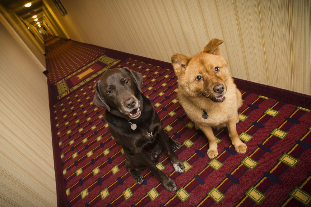 Pet-Friendly Hotel Chains with Low Rates and Low (or no) Pet Fees - Image