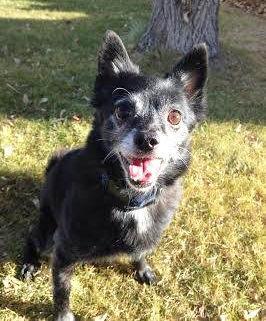 Butte: Playful Mack (Mack)