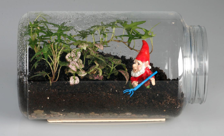SEE PHOTOS Keep growing season going with terrariums Local