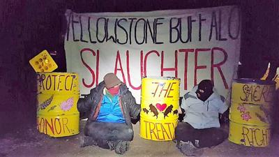 Bison slaughter protesters