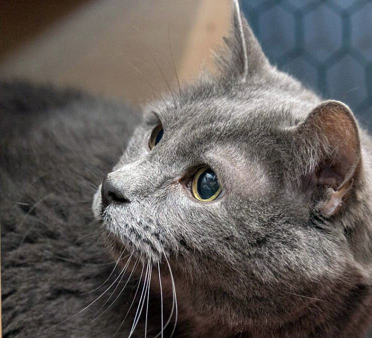 4 Paws Rescue pet of the week