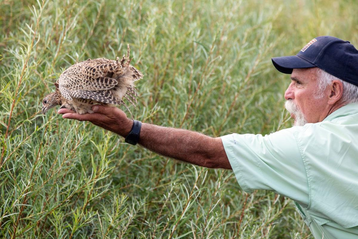 Boys & Girls Ranch releases pheasants into the wild