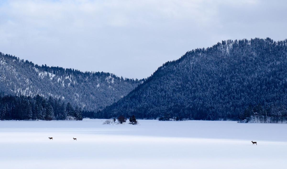 Salmon Lake file