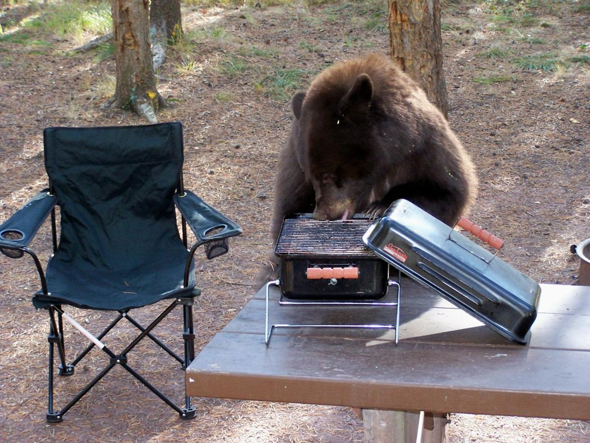 Bear on grill