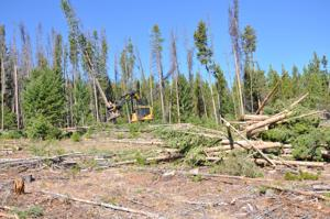 3-year court battle over timber harvesting and restoration project east of Deer Lodge fails