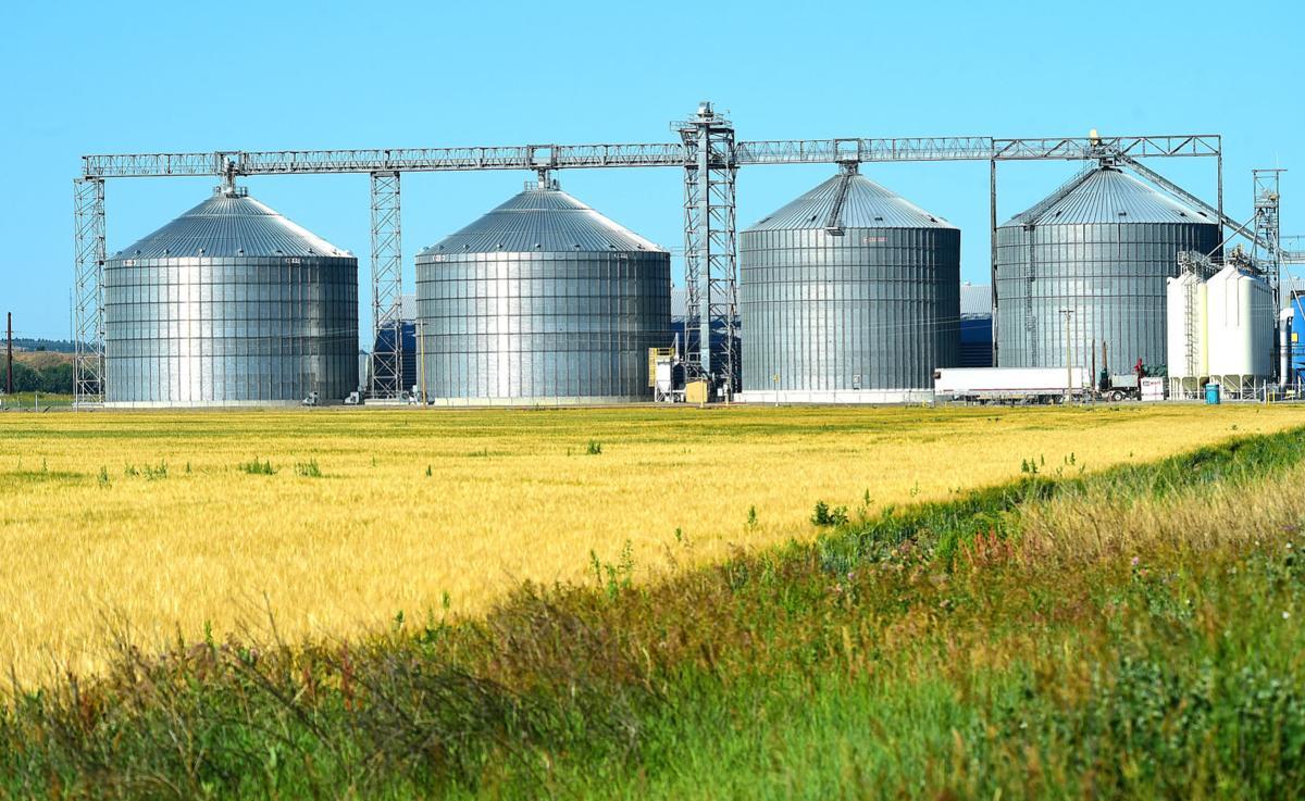 MolsenCoors barley