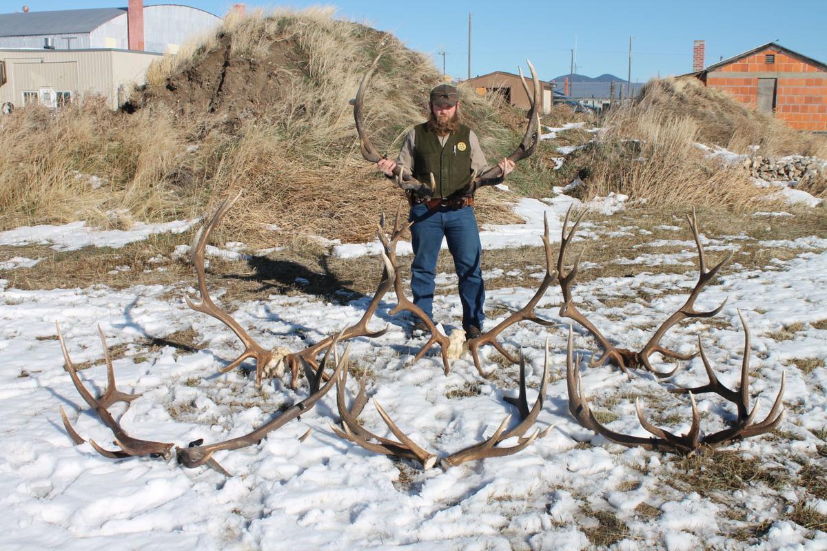 Fergus County Poaching case