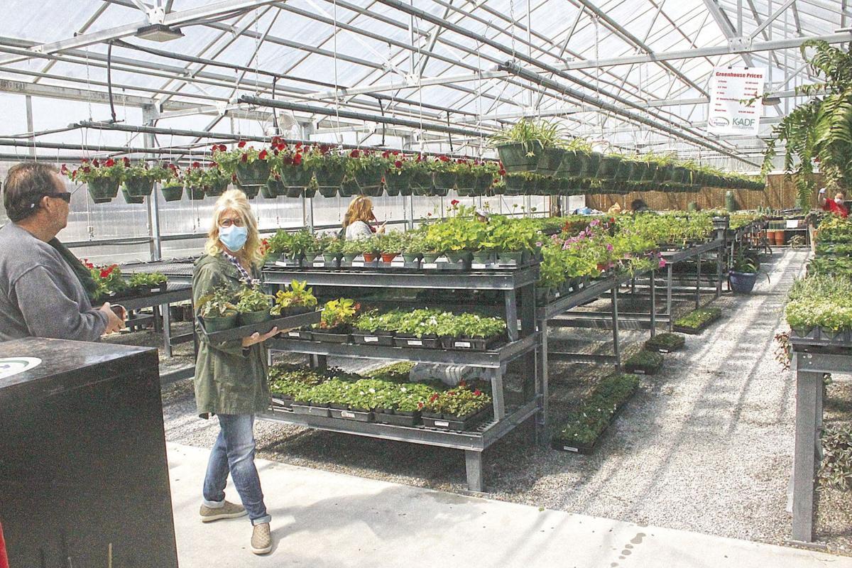 Plant sale greenhouse