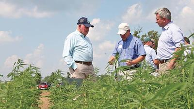 Quarles praises hemp rule