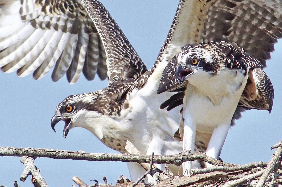 Leaving the nest