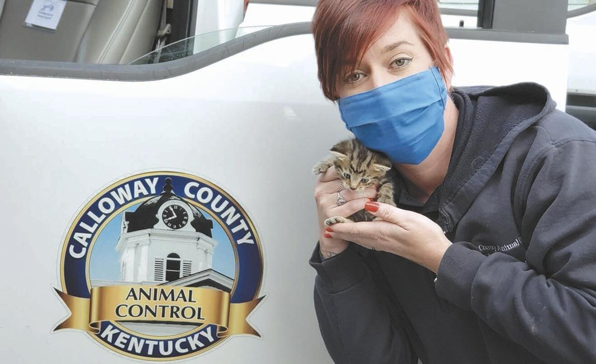 Overrun by kittens, animal shelter and Humane Society encourage fostering help from public