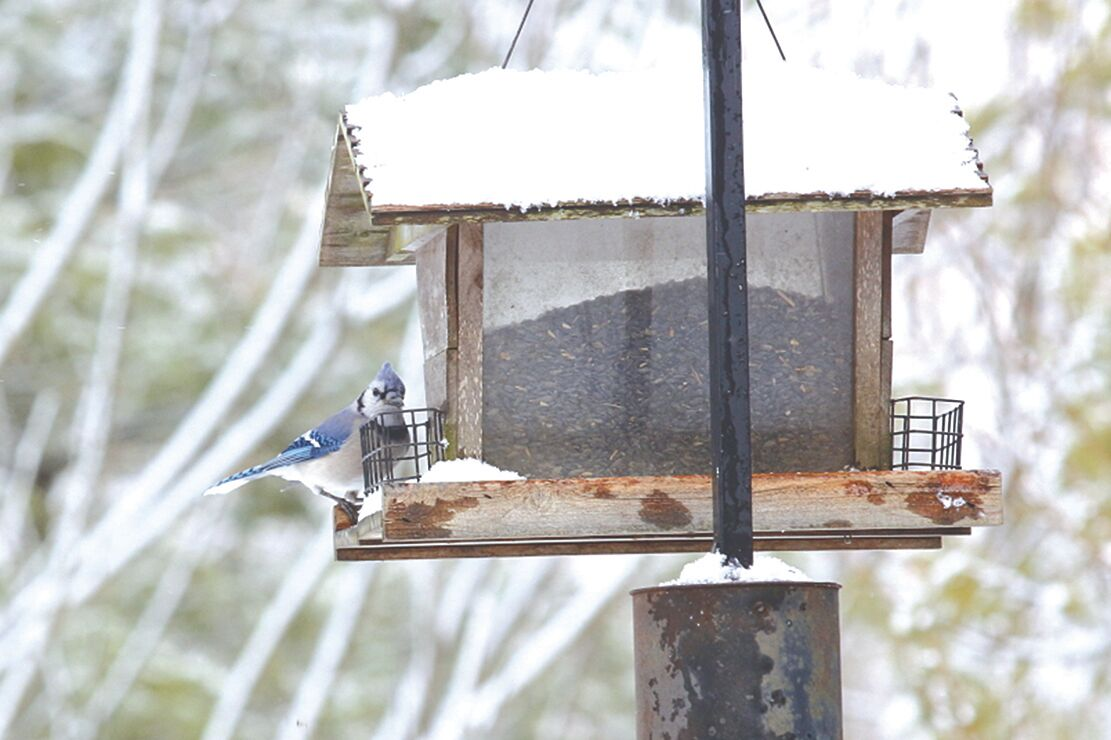 Fish and Wildlife: Clean bird feeders to avoid salmonella outbreaks