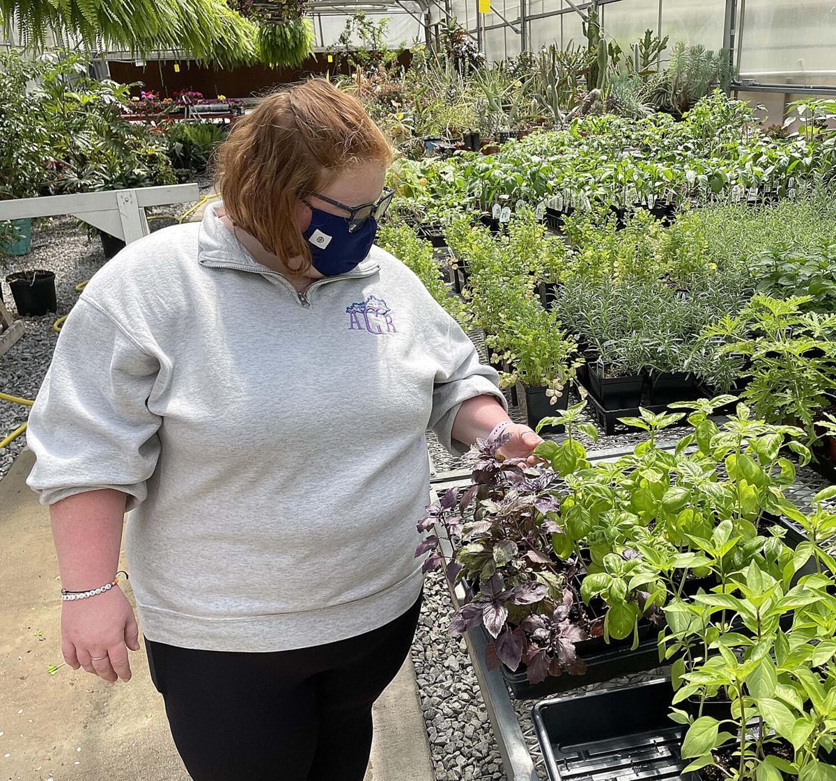 Arboretum Plant Sale herbs