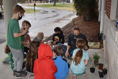 Murray Elementary seedling project