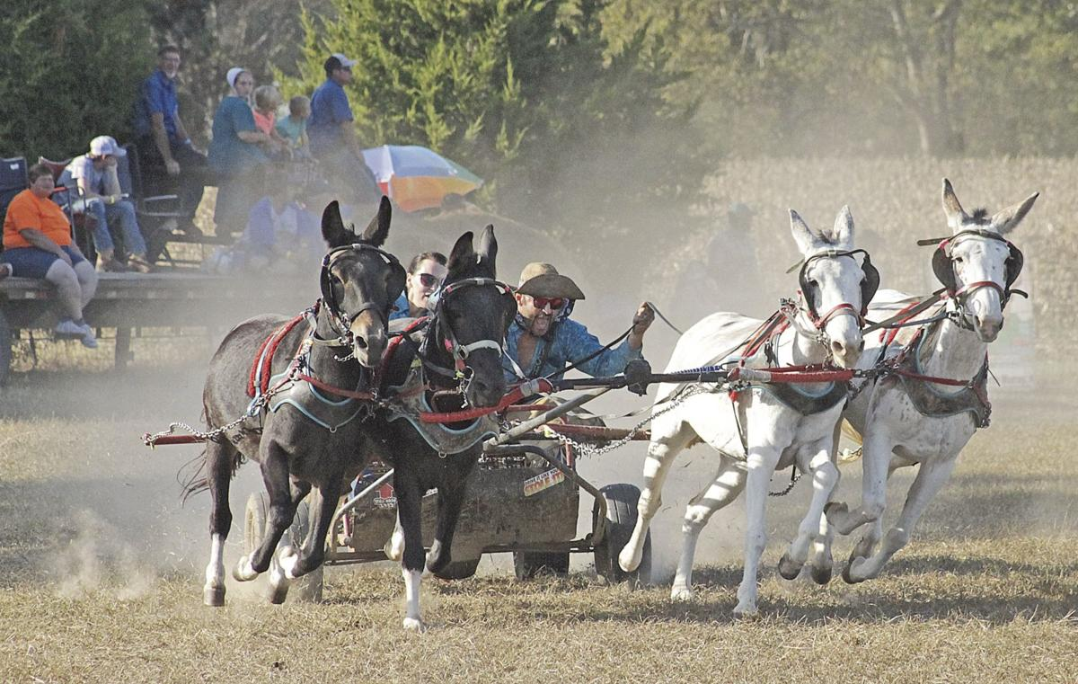 Chuck Wagon Four Up Mules