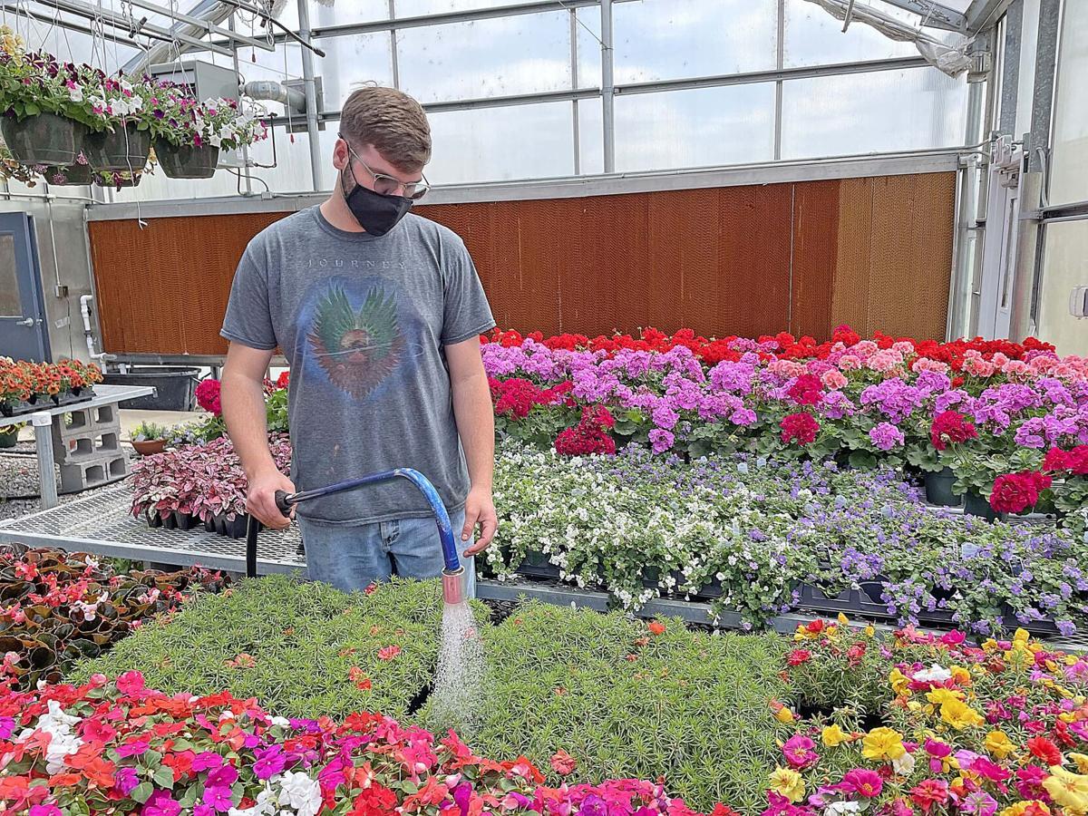 Arboretum Plant Sale watering