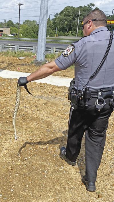 MPD rattlesnake aftermath
