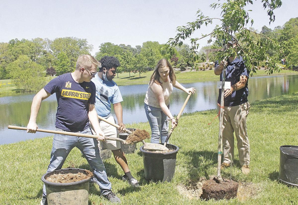 Townsend tree shovels