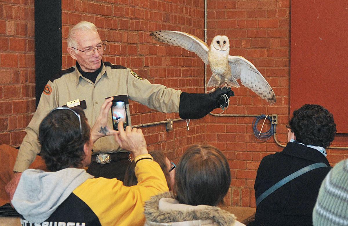Eagle watch-barn owl