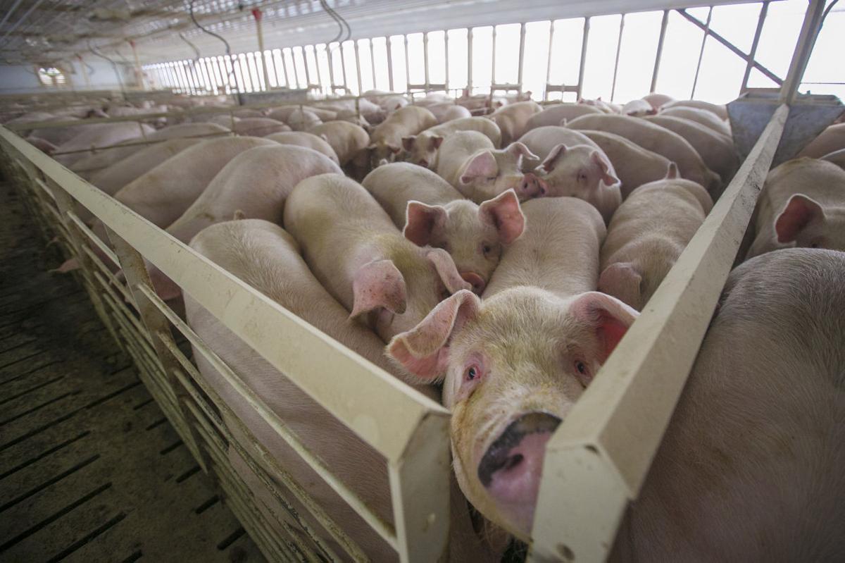 Animal confinement operation