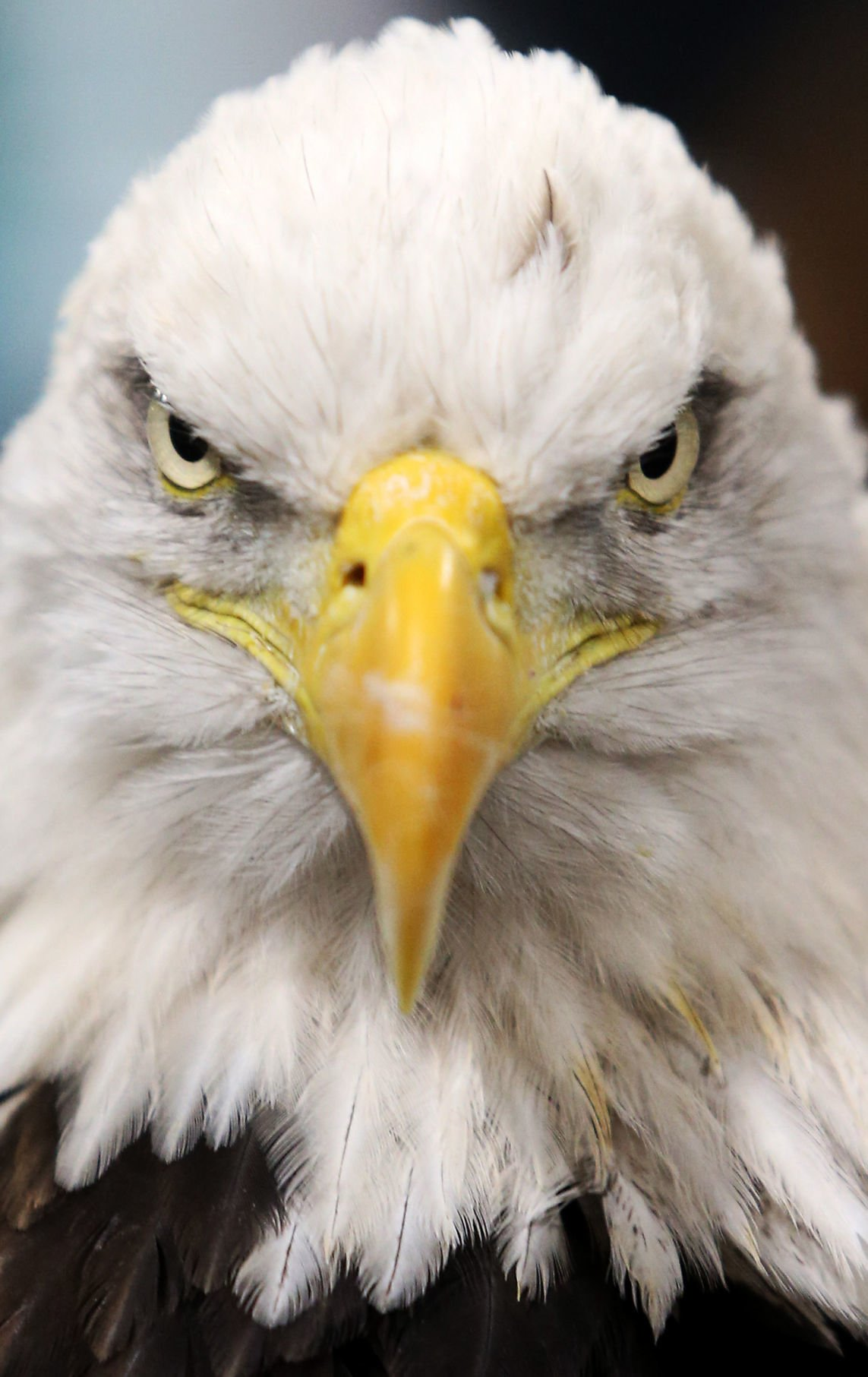010518-Bald-Eagle-Days-2018-002