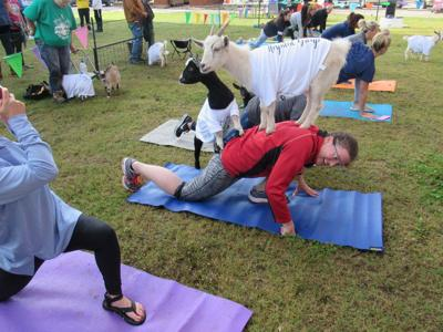 Goat yoga returns as part of fundraiser