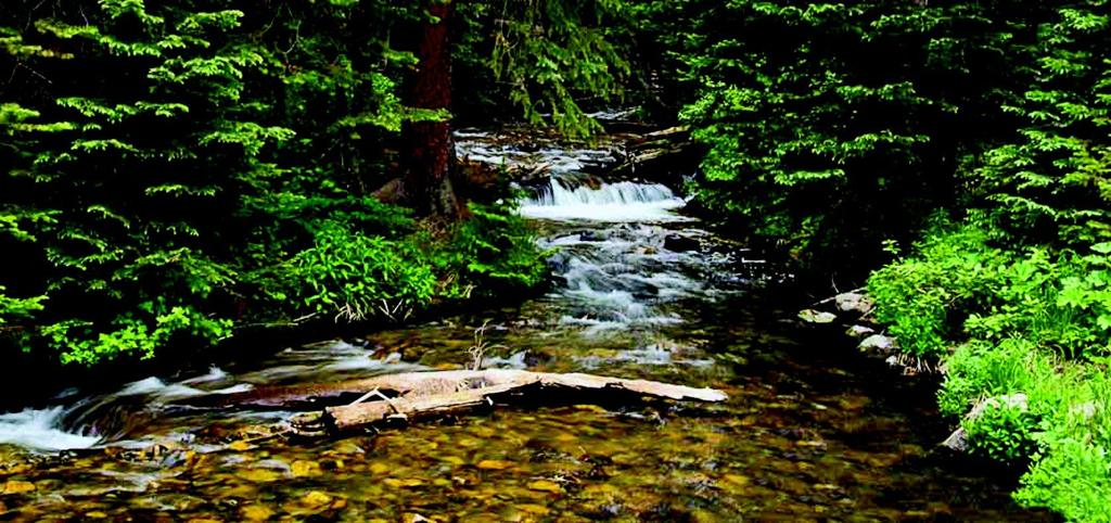 Three Rivers Photo Club names month's top shooters | Lifestyles