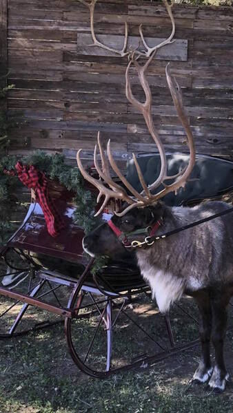 Rudolph's Rockin' Christmas Kick-Off set for Friday