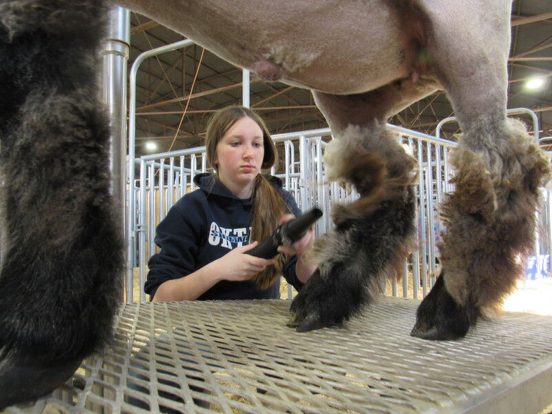 Muskogee County Livestock Show preps youth for regional show